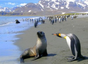 funny-penguin-and-seal-399x288.jpg